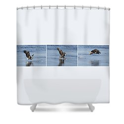 Eagle Triptych 2016-2 Shower Curtain