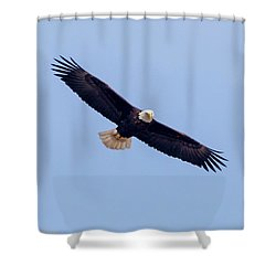 Shower Curtain featuring the photograph Eagle Watch 2018 by Ricky L Jones