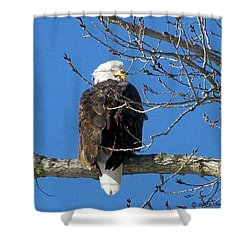 Eagle Watch Shower Curtain by Sue Stefanowicz