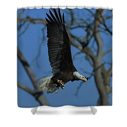 Shower Curtain featuring the photograph Eagle With Fish by Coby Cooper