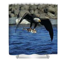 Shower Curtain featuring the photograph Eagle With Fish Flying by Coby Cooper