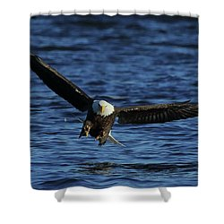 Shower Curtain featuring the photograph Eagle With Talons Up by Coby Cooper
