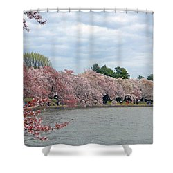 Early Arrival Of The Japanese Cherry Blossoms 2016 Shower Curtain