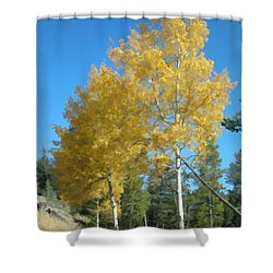 Early Autumn Aspens Shower Curtain