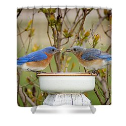 Early Bird Breakfast For Two Shower Curtain by Bill Pevlor