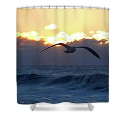 Early Bird Shower Curtain by Newwwman