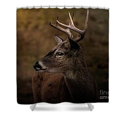 Early Buck Shower Curtain by Robert Frederick