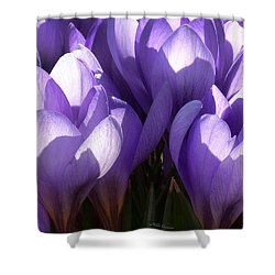 Early Crocus Shower Curtain