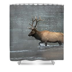 Early Crossing Shower Curtain