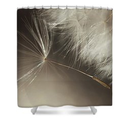 Shower Curtain featuring the photograph Early Departure by Amy Tyler