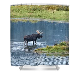 Early Morning Crossing In Grand Teton Shower Curtain by Sandra Bronstein