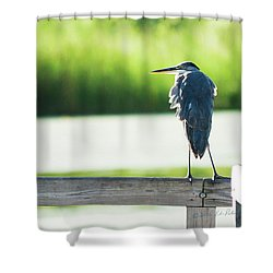 Early Morning Great Blue Heron Shower Curtain by Edward Peterson