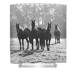 Early Morning Horses Shower Curtain by Hazy Apple