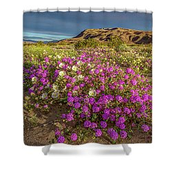 Shower Curtain featuring the photograph Early Morning Light Super Bloom by Peter Tellone