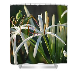Early Morning Lily Shower Curtain