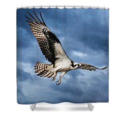 Shower Curtain featuring the photograph Early Morning Osprey by Brian Tarr