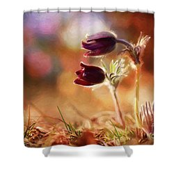 Early Morning Purple Pasque Shower Curtain