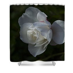 Early Morning Rose Shower Curtain by Dan Hefle