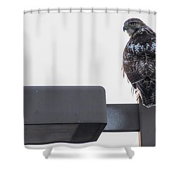 Shower Curtain featuring the photograph Early Morning Sentinel   by Ricky L Jones
