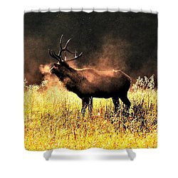 Early Morning Steam Shower Curtain