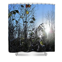Early Morning Sun Shower Curtain by Andy Walsh