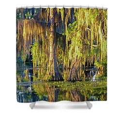 Early Morning Swampscape Shower Curtain by Kimo Fernandez