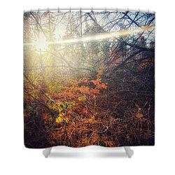 Early Morning Winter Sun Shower Curtain