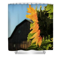 Shower Curtain featuring the photograph Early One Morning by Chris Berry