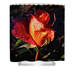 Early Rose Shower Curtain by Mark Blauhoefer