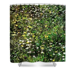 Early Spring Beauty In Umbria Shower Curtain