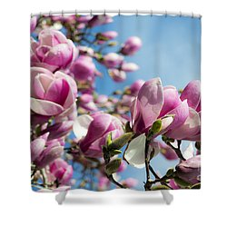 Early Spring Magnolia Shower Curtain