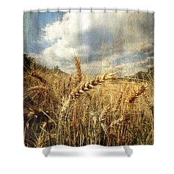 Ears Of Corn Shower Curtain