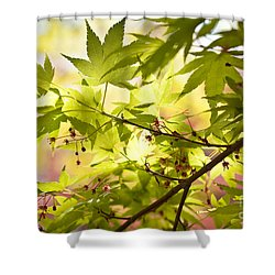 Earth Walk Shower Curtain by Susan Cole Kelly