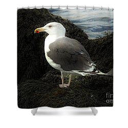 East Coast Herring Seagull Shower Curtain