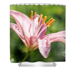 Easter Lily 1 Shower Curtain by Tony Cordoza