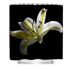 Easter Lily 2 Shower Curtain