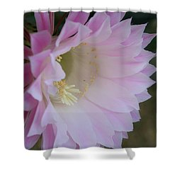 Easter Lily Cactus East Shower Curtain