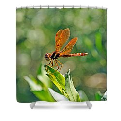 Eastern Amber Wing Dragonfly Shower Curtain by Kenneth Albin