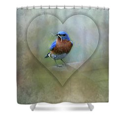 Shower Curtain featuring the photograph Eastern Bluebird by Brenda Bostic