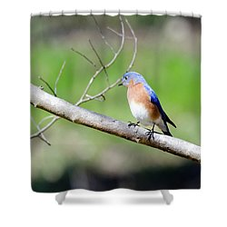 Shower Curtain featuring the photograph Eastern Bluebird by George Randy Bass