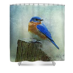 Eastern Bluebird II Shower Curtain