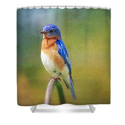 Shower Curtain featuring the photograph Eastern Bluebird Painted Effect by Heidi Hermes