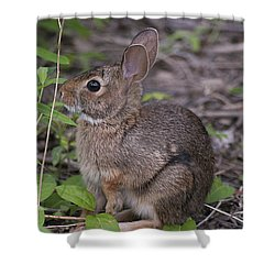 Eastern Cottontail 20120624_11a Shower Curtain