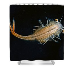 Eastern Fairy Shrimp Easterbrook Forest Shower Curtain by Piotr Naskrecki