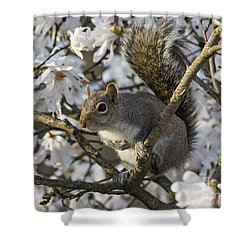 Shower Curtain featuring the photograph Eastern Gray Squirrel - D009897 by Daniel Dempster