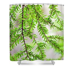Shower Curtain featuring the photograph Eastern Hemlock Tree Abstract by Christina Rollo