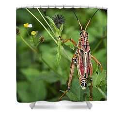 Eastern Lubber Grasshopper  Shower Curtain by Saija  Lehtonen