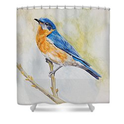 Eastern Mountain Bluebird Shower Curtain