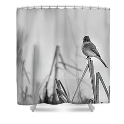 Shower Curtain featuring the photograph Eastern Phoebe 2017 by Thomas Young