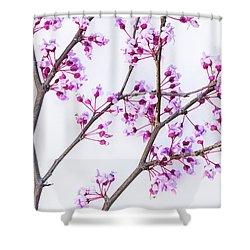 Eastern Redbud Shower Curtain